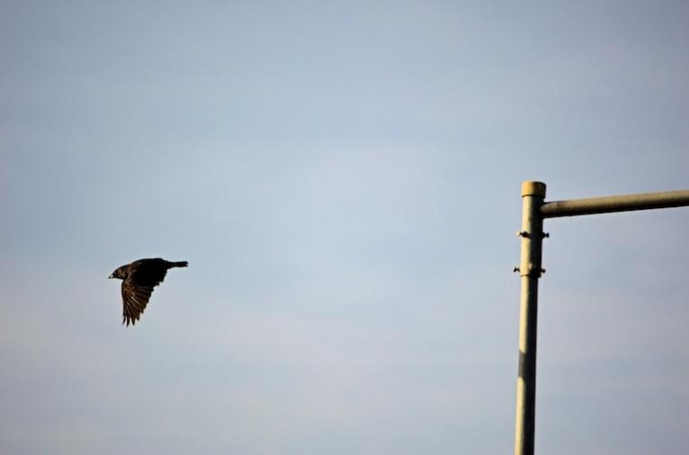 vogelvlucht-1456049732B8v
